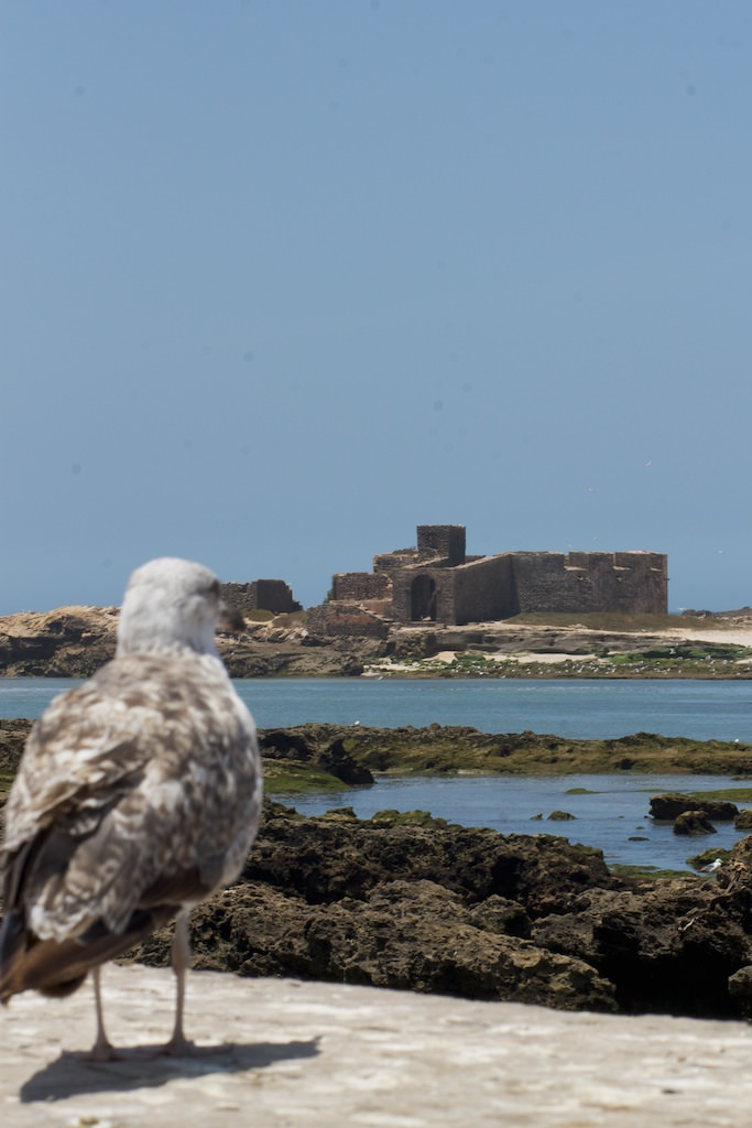 Seagull Castle Observer