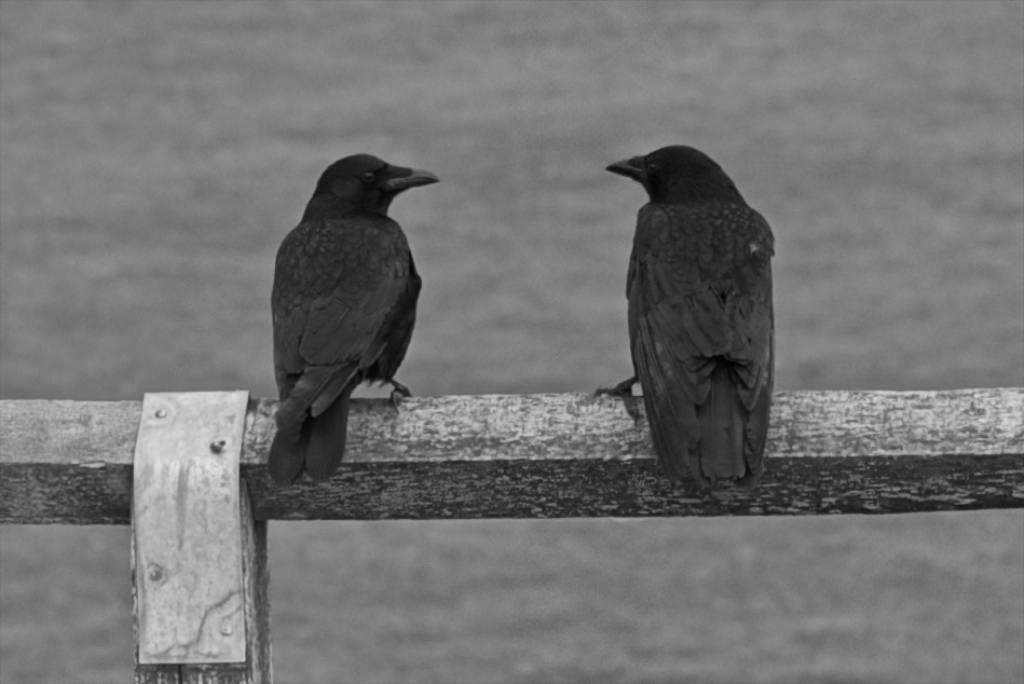 Crows Seaford Nov2012